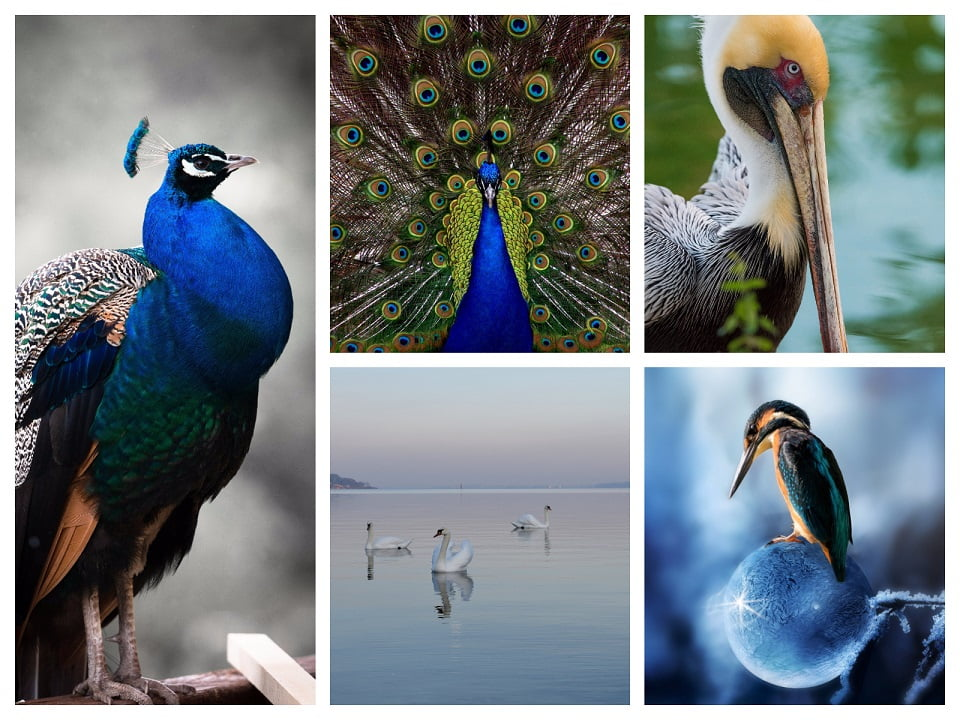 Top 13 HD Bird Wallpapers for Android Cover
