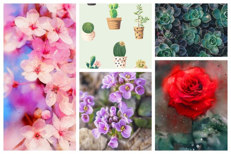 Top 12 HD Flowers & Plants Wallpapers for Android